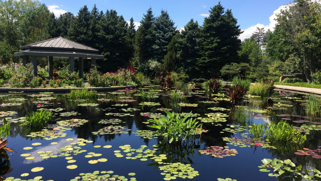 The Lily Pad Garden at the Denver Botanic Gardens. In the background, there are green, full pine trees. In front of them off to the left is the roof and railing of a sheltered sitting area. In front of the railing are red and pink flowers and green shrubs. The rest of the picture is all lily pads and waterplants growing in a large pond of dark water. The sky is blue, and there a few white clouds.